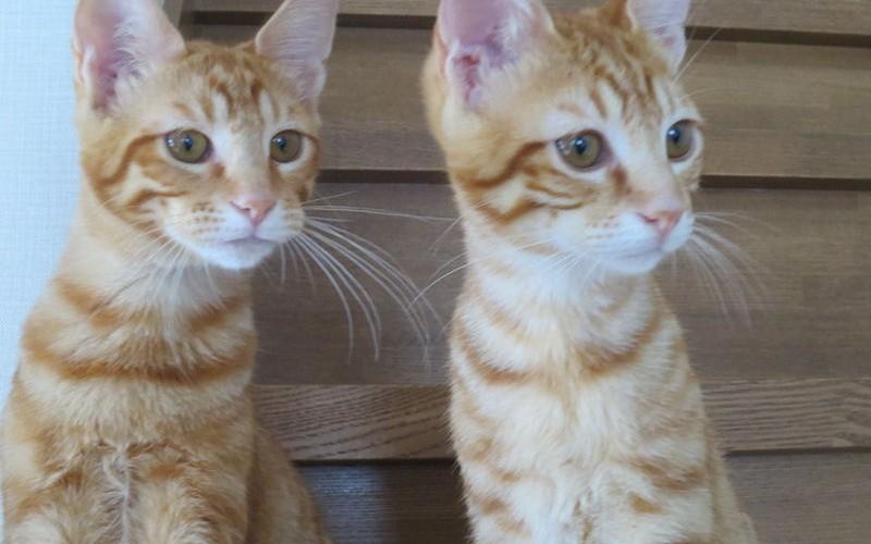 """愛猫""""太郎と吾郎の部屋"""" ブログはじめます!"""